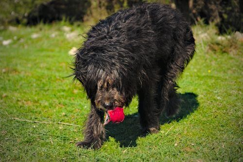 hunde spiele: hund beim apportieren