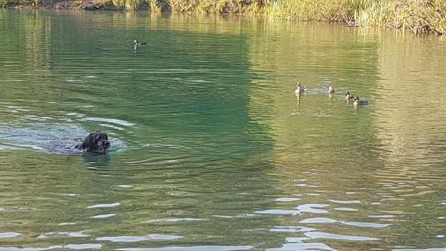 hunde spiele: Bewegungsspiel im Wasser