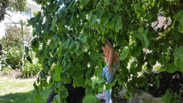 Hund sucht Kind im Garten