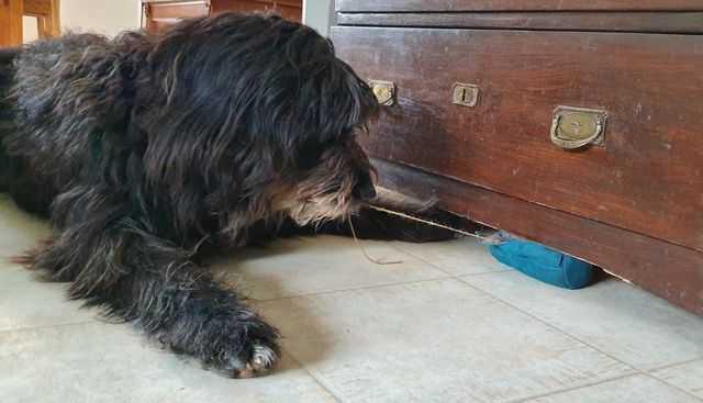 Hund zieht Futterbeutel an Schnur aus dem Versteck