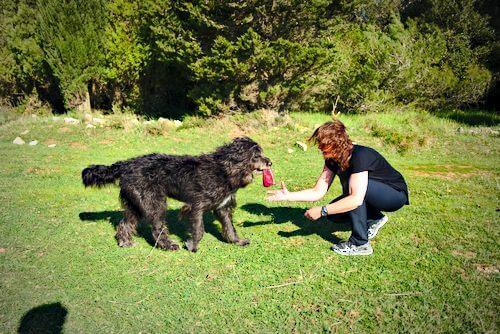 hunde spiele: Hund lernt die Grundlagen des Apportierens