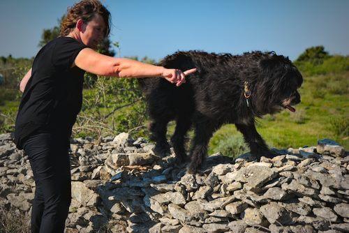 Hunde spiel Gelände agility: Hund balanciert auf einer Bank