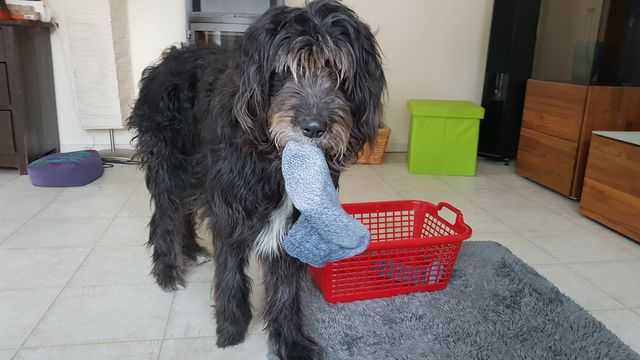 hunde spiele: haushaltshilfe