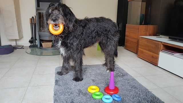 hunde spiele: hochstapler