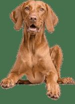 Hunde Bewegungsspiele