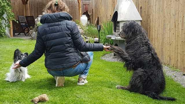 hunde spiele: in-der_mittagspause