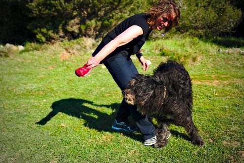 hundepsiele ohne kommando