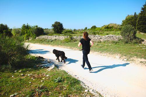 Mensch und hund joggen zusammen